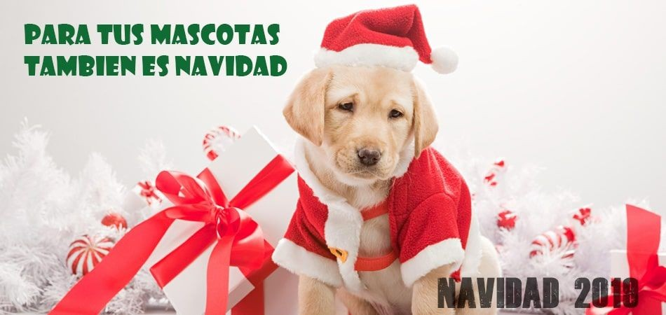 Navidad mascotas